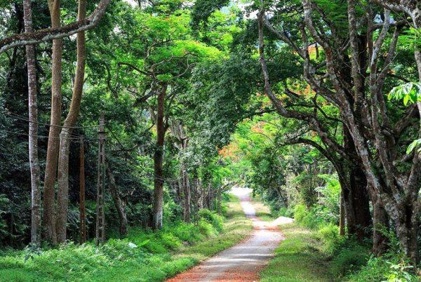 vườn quốc gia cúc phương top 10 địa điểm du lịch ninh bình đẹp